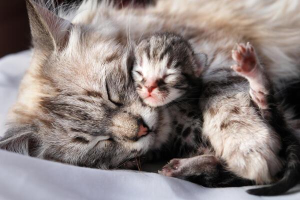 Penyebab Head Bunting pada Kucing, Bagaimana Tanda & Cara Menanganinya?