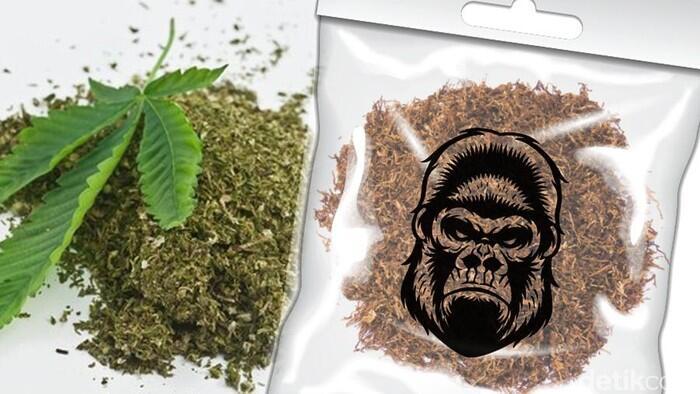 Stop Bilang Tembakau Gorila = Ganja Sintetis. Itu Hoax Besar ! Cekidot 5 Perbedaannya