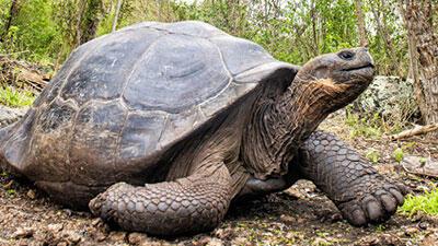 10 Hewan Dengan Usia Terpanjang