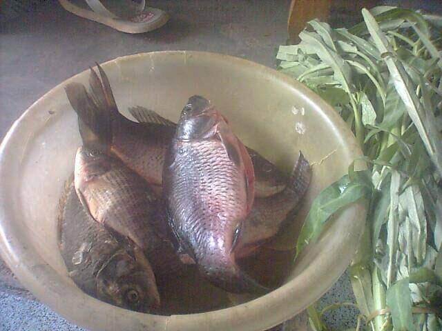 Pesmol Ikan Mas, Kuliner Khas Sunda Pelengkap Menu Berbuka Puasa Yang Lezatnya Nampol
