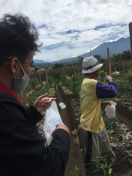 Mahasiswa PMM UMM Bantu Kegiatan Petani Dalam Pengelolaan dan Memanen Bunga Mawar