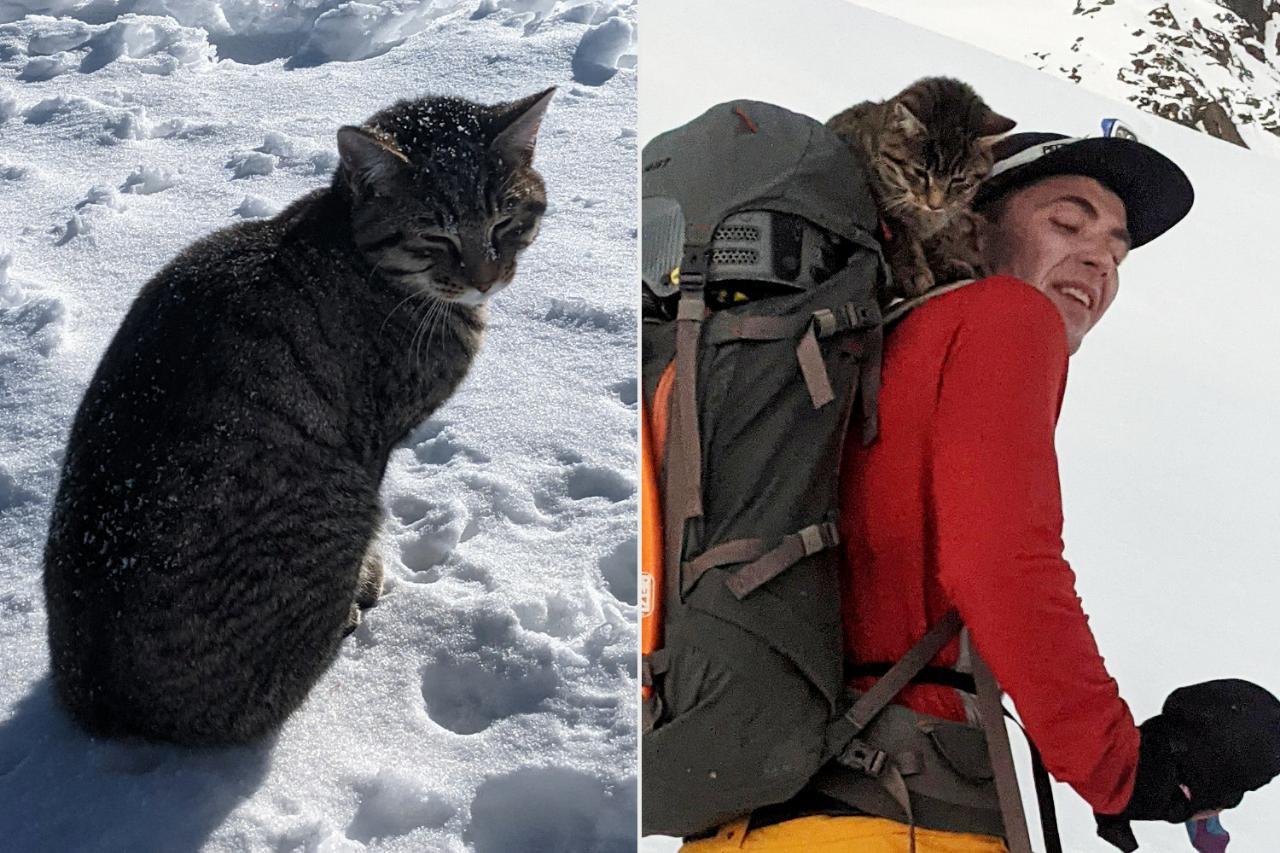 Greget! Kucing Ini Ditemukan Nyasar Selama 4 Hari di Gunung Bersalju