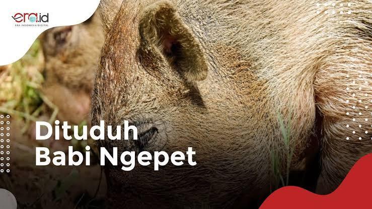 Zaman Udah Modern, Masih Aja Percaya Babi Ngepet!! Negara Lain Udah Neliti Mars