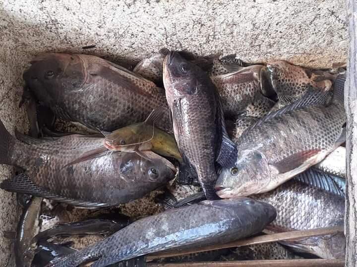 UMKM Tambak Ikan Laut Keluarga, Sehat Dengan Protein!