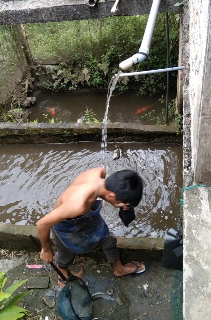 UMKM Ternak Budidaya Ikan Lele Dan Ikan Mas, Untungnya Lumayan Berkah!