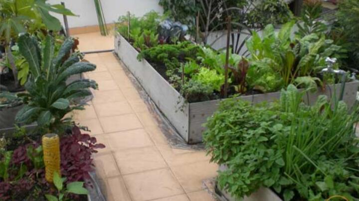 Ingin Tau Cara Pengolahan Lahan Pertanian Organik? Yuk Kunjungi FAM Organic