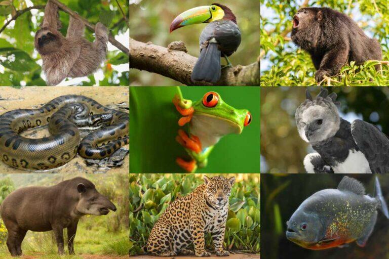 Tempat-Tempat Langganan Para Ilmuwan untuk Berburu Spesies Baru, Ada Indonesia Gan!