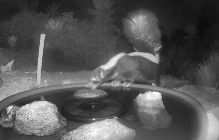 Bikin Air Mancur Berkamera di Halaman, Wanita Ini Dapat Pengunjung yang Menakjubkan