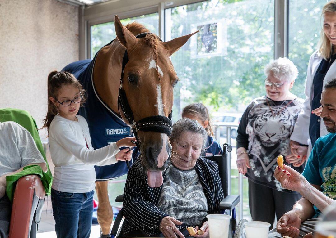 Seekor Kuda Menjadi Dokter, 1000 Lebih Pasien Sudah Ditemuinya