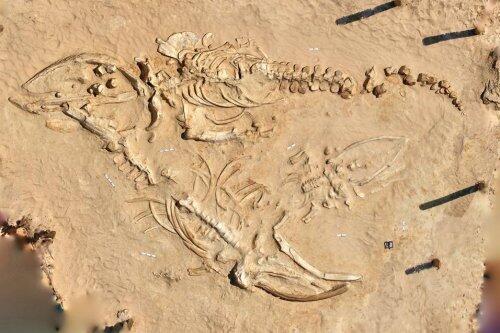 Para Arkeolog ini Berhasil Mengungkap Misteri Kematian Paus Raksasa di Chili