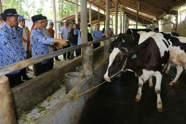 Jadikan Kebiasaan Investasi Ternak Masyarakat Banyuwangi Sebagai Senjata Sejahtera