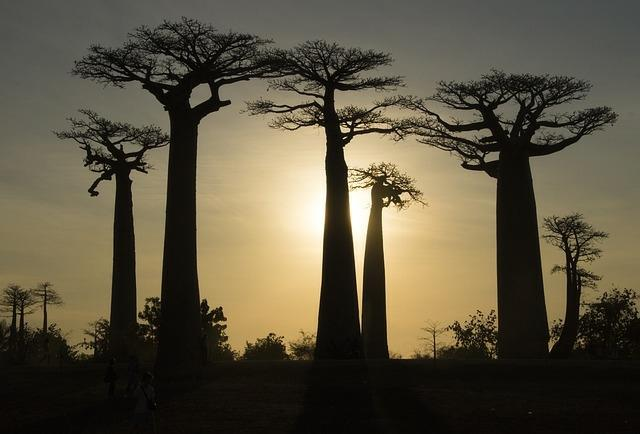 Menanam Pohon Baobab untuk Masyarakat Banyuwangi Selalu Berseri!