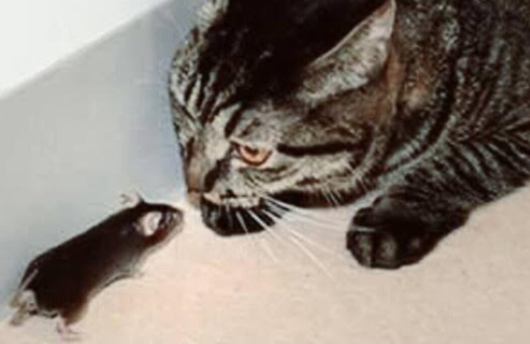Terungkap, Kenapa Kucing Zaman Now 'Emoh' Berburu Tikus (Analisa Dari Ahlinya Ahli)