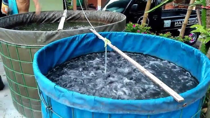 Pemberian Garam untuk Kolam Ikan, Perlu atau Tidak?