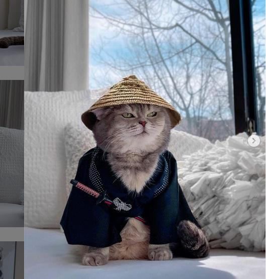 Stylish Bak Selebgram , Kucing ini Curi Perhatian