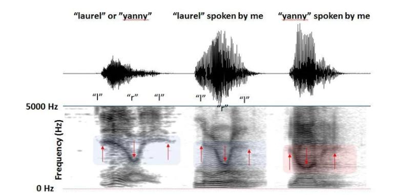 Dua Ilusi Suara Ini Pernah Bikin Perdebatan Di Seluruh Dunia. Gini Penjelasannya!