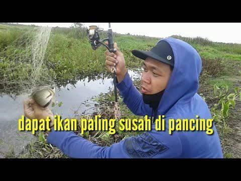 Mancing Jaring, Dapat Ikan Tembakang Banyak? HOAK Itu!