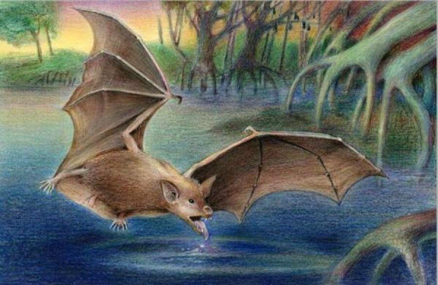 Fosil Kelelawar Vampir Raksasa Ditemukan di Argentina