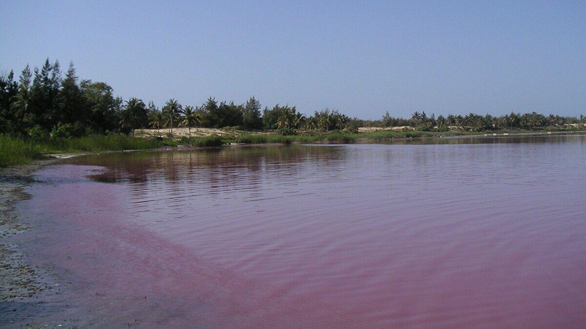 Laguna di Argentina Berubah Warna Menjadi Pink!