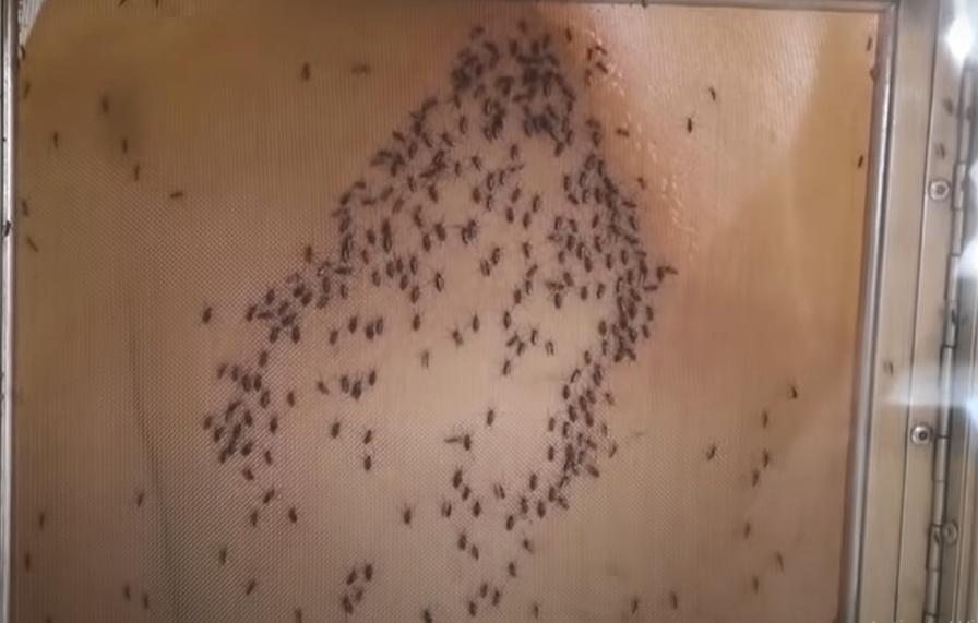 Apa Jadinya Jika Agan Digigit Satu Juta Nyamuk?