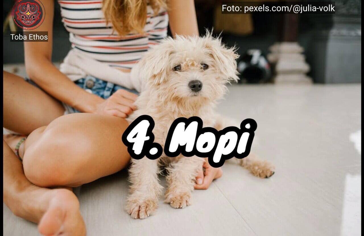 "Inilah Nama Panggilan Untuk Peliharaan ""Anjing"" Yang Sering Digunakan Orang Batak"