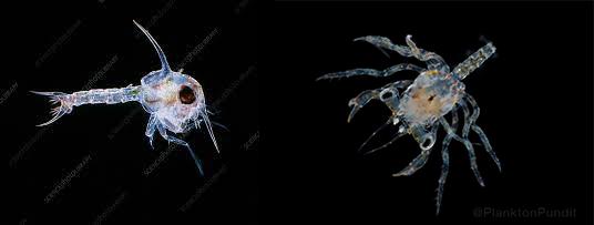 Jarang Orang Tahu, Hewan-hewan Ini Ternyata Juga Melakukan Metamorfosis Loh!