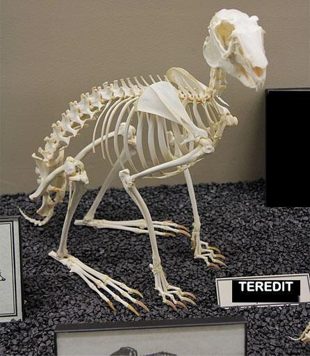 Coba Tebak Hewan-hewan Berikut dari Bentuk Tengkoraknya! Dijamin Bingung!
