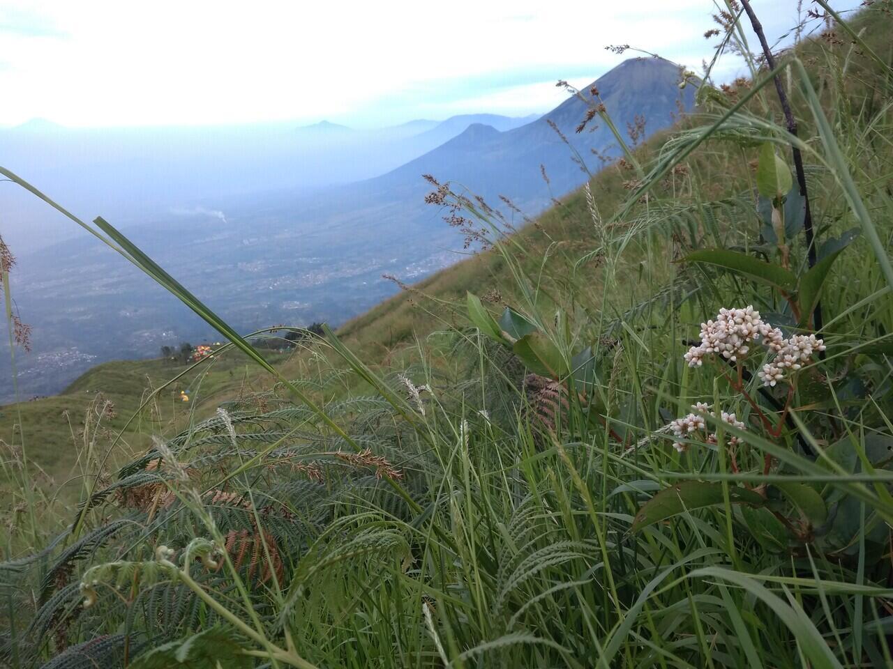 Cerita pengalaman ikut open trip mendaki gunung Sumbing.