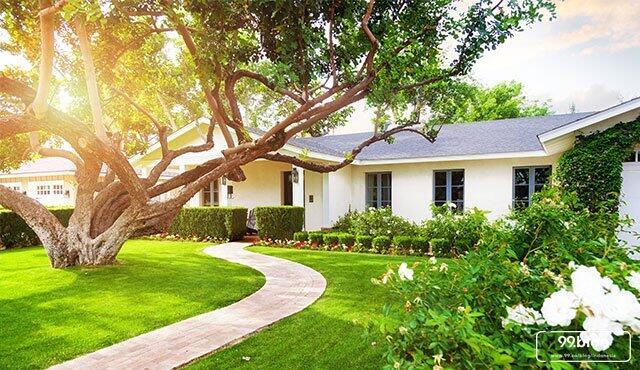 Begini Enaknya ada Pohon di Halaman Depan Rumah
