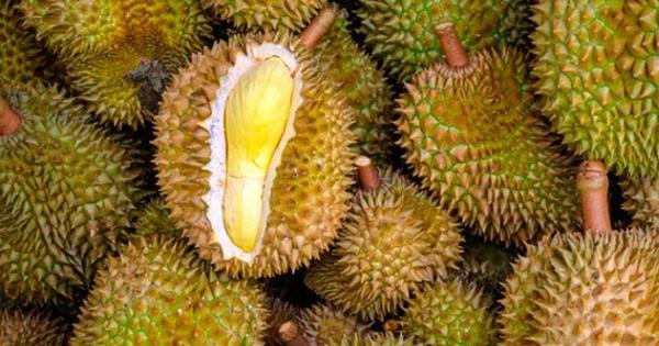 belum-makan-durian-kalau-belum-makan-durian-tigalingga