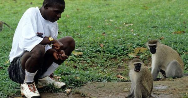 nyata-bocah-ini-di-besarkan-oleh-keluarga-monyet