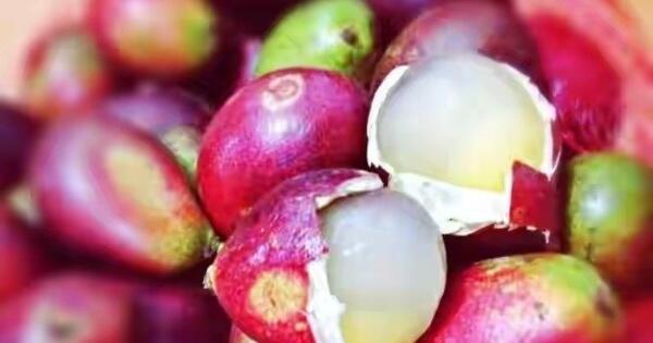 buah-buahan-yang-jarang-ada-di-jual-pada-zaman-now