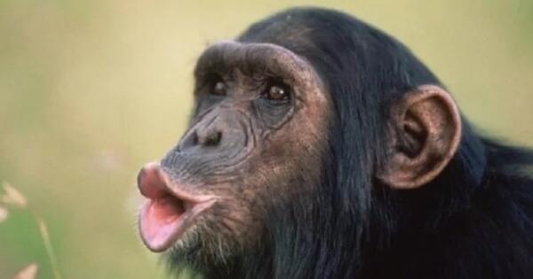 hewan-apa-yang-paling-cerdas