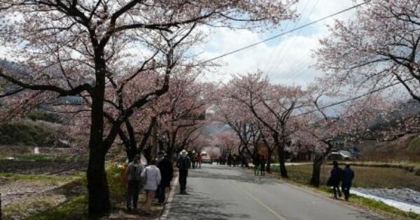 spring-in-korea-aneka-informasi-dasar