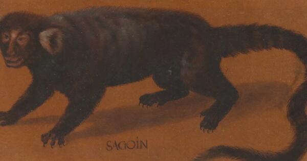 lukisan-hewan-abad-ke-16-dari-cat-air