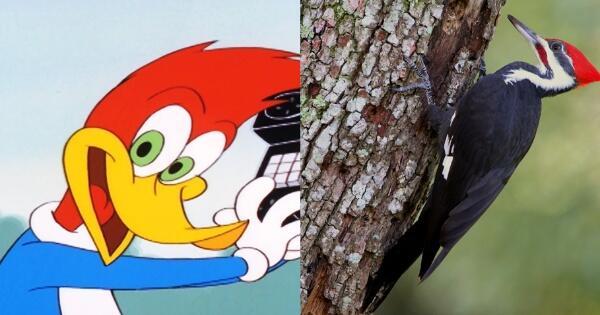 ini-penampakan-asli-karakter-kartun-hewan-di-tv-gan