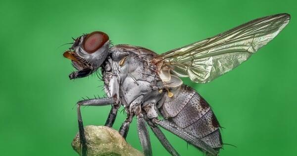 7-kekuatan-tersembunyi-lalat