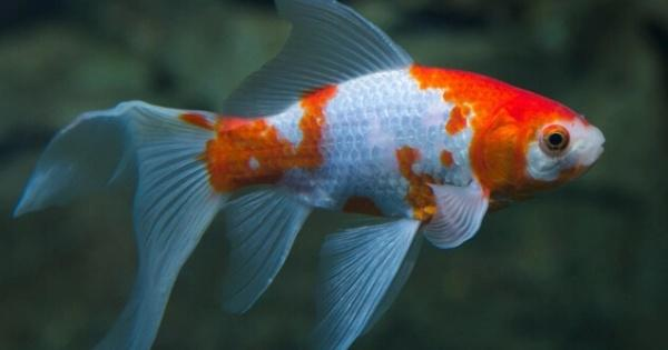 cantik-namun-mematikan-inilah-ikan-perusak-aquascape