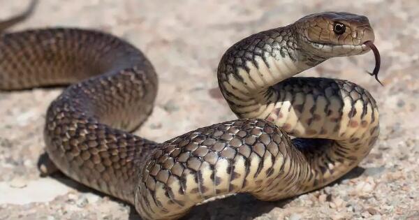 15-fakta-mengejutkan-seputar-ular-yang-belum-banyak-diketahui-orang