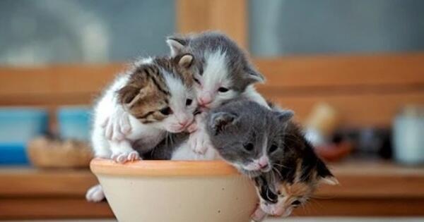 mengapa-sebaiknya-anda-tidak-lagi-menyukai-kucing