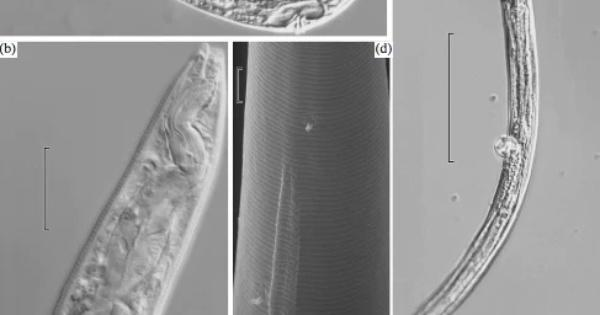 cacing-ini-beku-selama-40000-tahun-gan