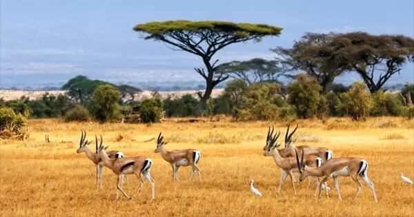taman-baluran-banyuwangi-nggak-usah-ke-afrika-daya-tarik-wisata