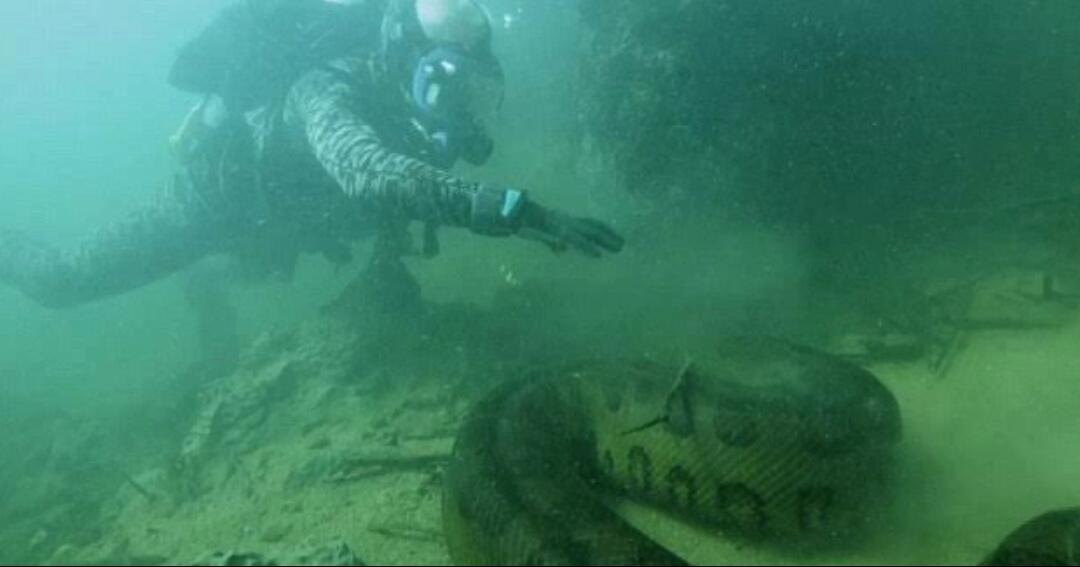 Demi 740 Juta Pria Ini Nekad Selami Sungai Amazon Untuk Menemui Anaconda Kaskus