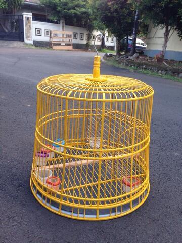 Burung tekukur untuk dijual