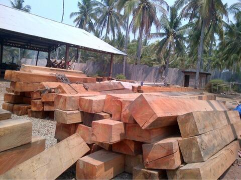 Hasil gambar untuk kayu nyatoh