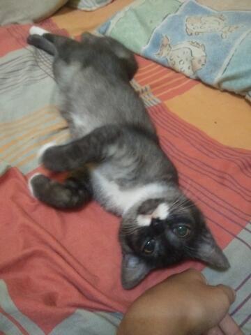 kucing anggora mix usia 6 bulan