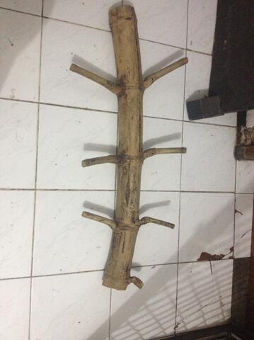 Bambu / Pring Pathil lele