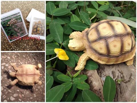 miniature replika sulcata tortoise