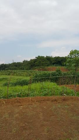 DI JUAL. Tanah 28.000m2 di Bogor
