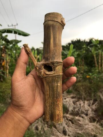 bambu Temu Ruas Pethuk Berlubang Asli